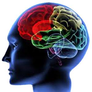 image of the brain - brain injury